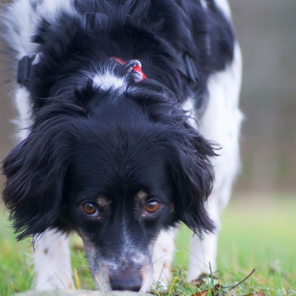 Hundhälsa